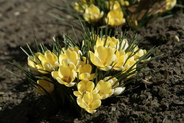 Фото ранневесенние цветы